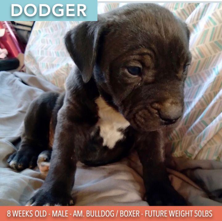 Dodger 1