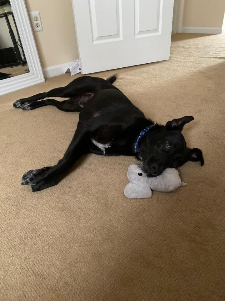 Wesley - Fostered in NJ 3