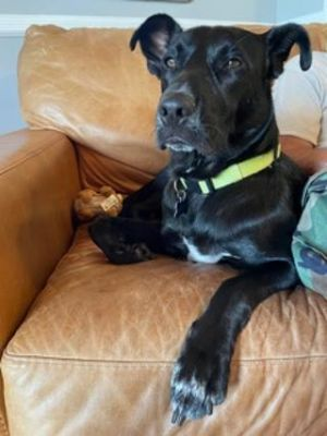 Wesley - Fostered in Walkill NY