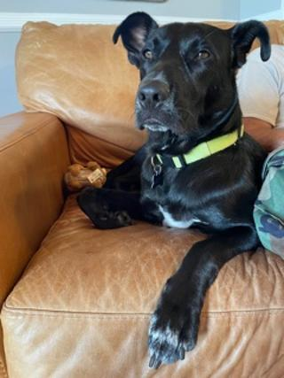 Wesley - Fostered in Walkill NY 1