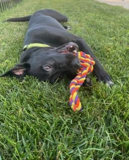 Wesley - Fostered in NJ