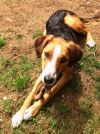 Lucas-Fostered in New England