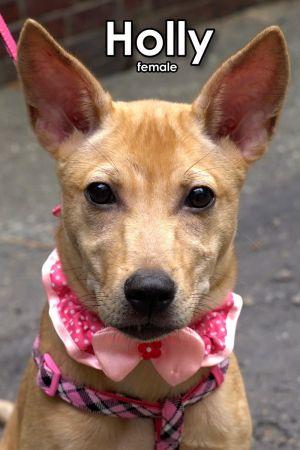 Holly Mountain Dog Dog