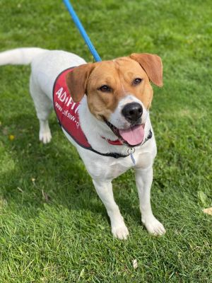 Lineth is a two year old 60 lb hound mix who came up from FL She is a sweet girl