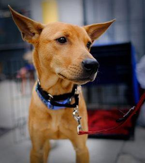 Henri Mountain Dog Dog