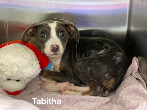Tabitha (SC) 3
