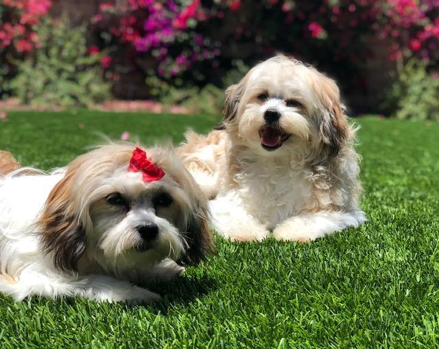 Charlie and Penelope - Courtesy Listing