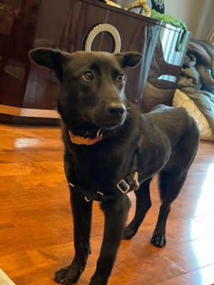 Ruby Mountain Dog Dog