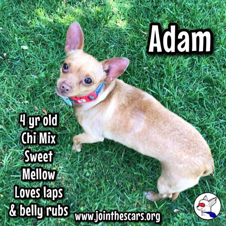 Adam 5