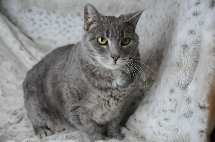 Betsy, an adoptable Domestic Short Hair Mix in Jamestown, CA_image-3