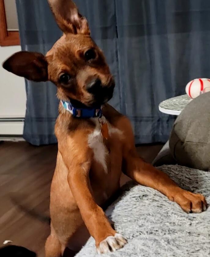 Puppy Coco 3