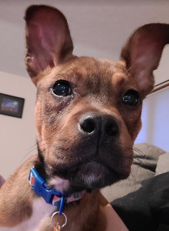 Puppy Coco 1