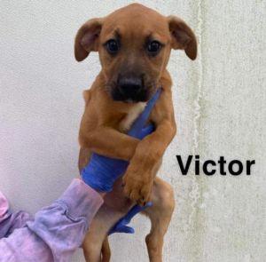 Victor (AL)