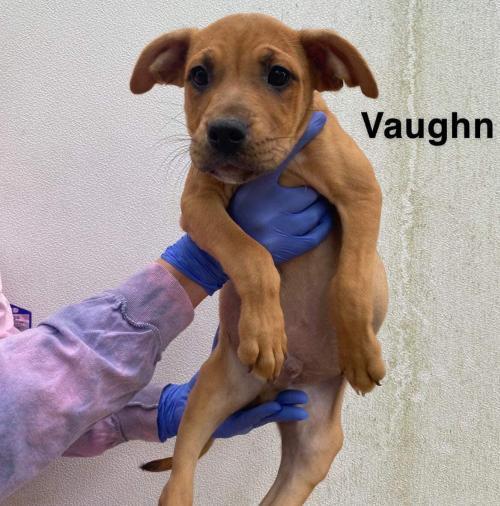 Vaughn (AL) 2