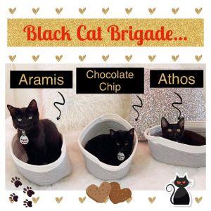 Athos (bonded to Aramis) Domestic Medium Hair Cat