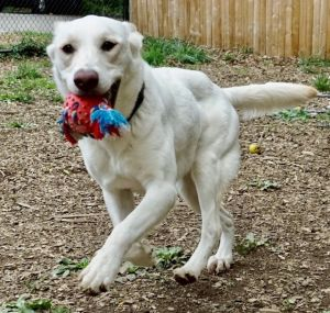 Willas favorite thing to do is play fetch She is a bit shy initially but is currently in a foster