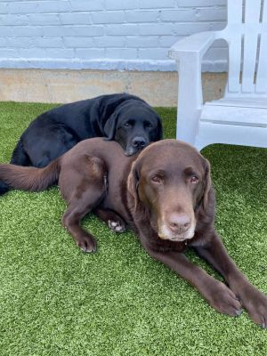 TO APPLY GO TO wwwLuckyDogRefugecom BONDED PAIR - ONLY AVAILABLE FOR ADOPTION TOGETHER Life  C