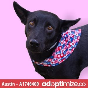 Austin is enjoying some time in Foster Care If you are interested in meeting this kiddo please e-m