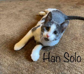 Han Solo - Star Wars Litter! 2