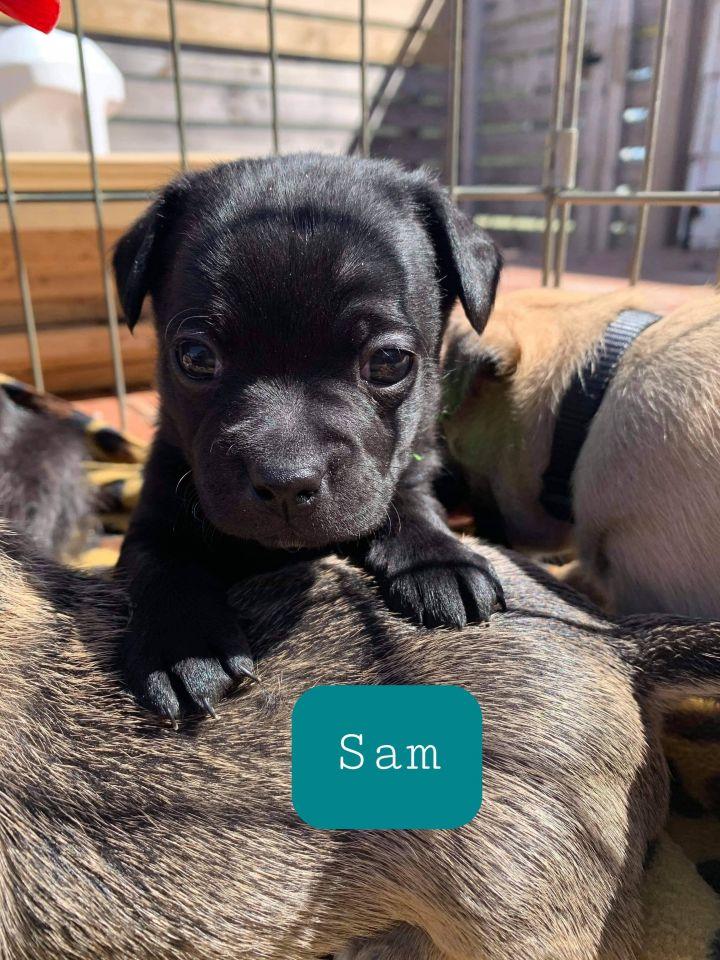 Sam 2