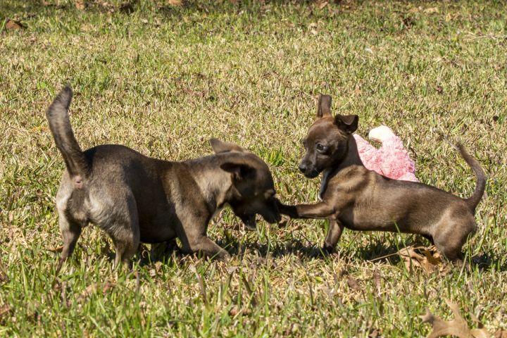 Mama Hershey and Baby Kiss 4