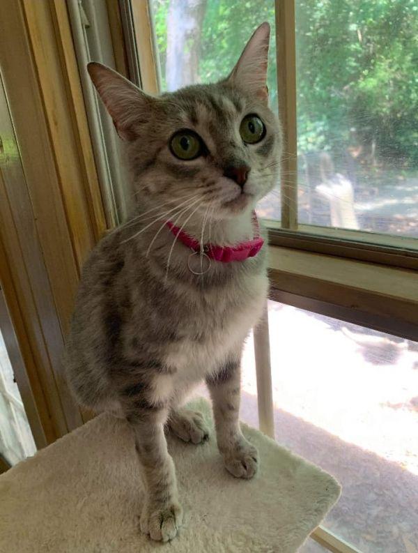 Photo of Pollyanna