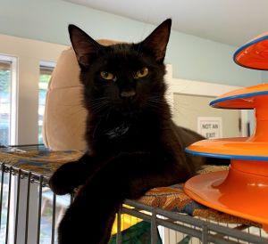 Photo of Silk and Chiffon