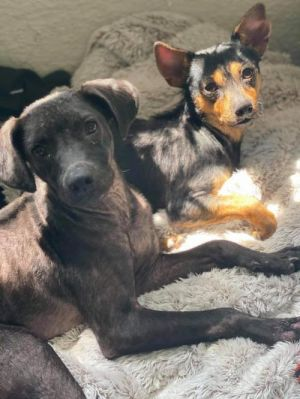 You can fill out an adoption application online on our official website Pedro and Peter are bonded