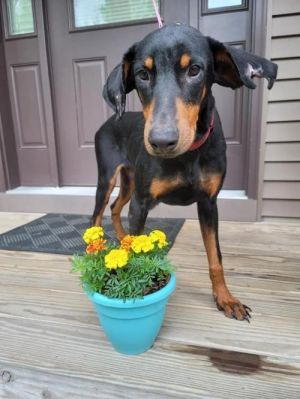 You can fill out an adoption application online on our official websiteBilly Boy TX is a male Dob