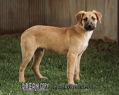 Maverick, an adoptable Shepherd & Hound Mix in Owensboro, KY_image-3