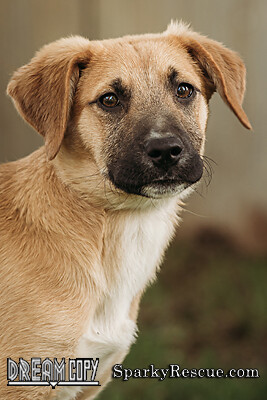 Maverick, an adoptable Shepherd & Hound Mix in Owensboro, KY_image-4