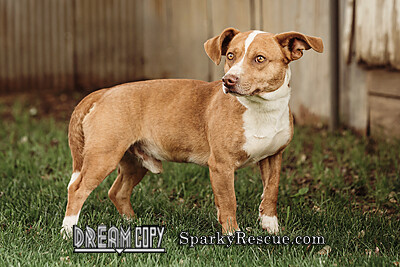 Aldo, an adopted Terrier Mix in Owensboro, KY_image-2