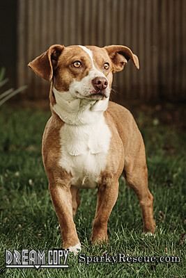 Aldo, an adopted Terrier Mix in Owensboro, KY_image-3