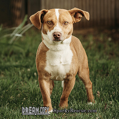 Aldo, an adopted Terrier Mix in Owensboro, KY_image-1
