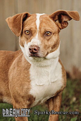 Aldo, an adopted Terrier Mix in Owensboro, KY_image-5