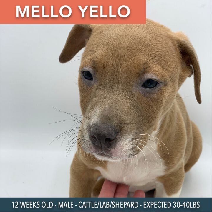 Mello Yellow 2
