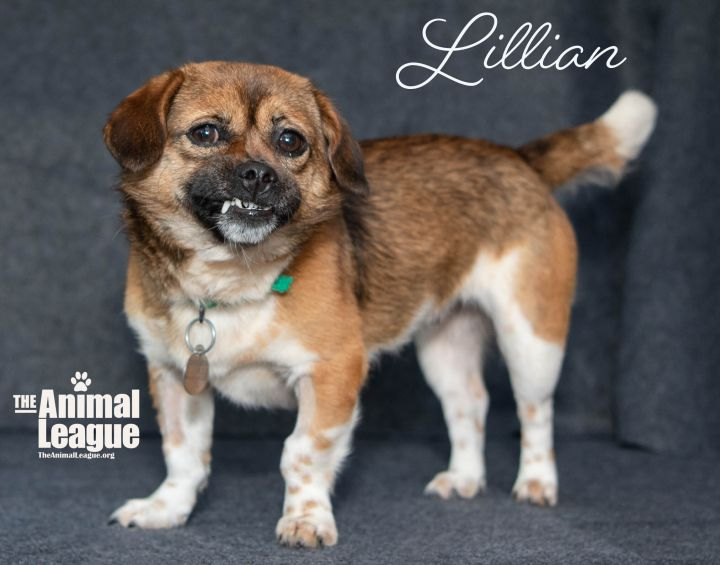 Lillian 3