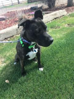 NYLA, an adoptable Mixed Breed in Loveland, CO_image-5