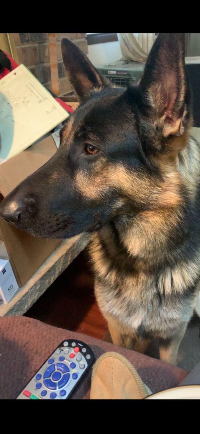 Bruno (Adoption Pending )