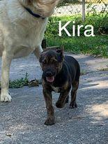 Kira 2