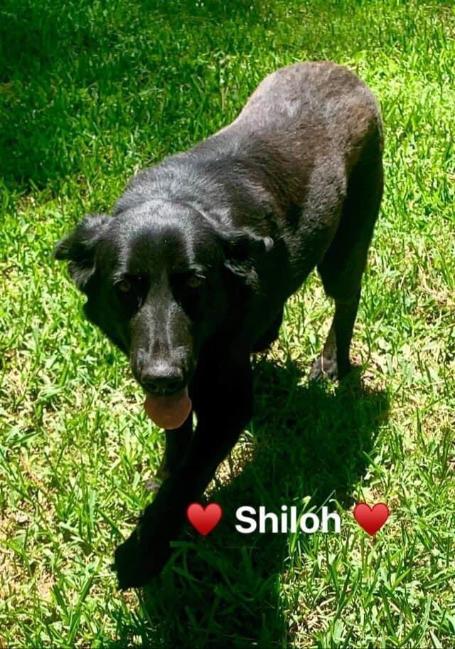 Shiloh 3