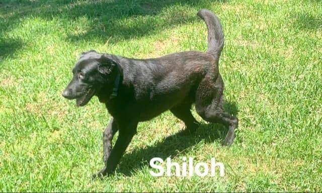 Shiloh 5