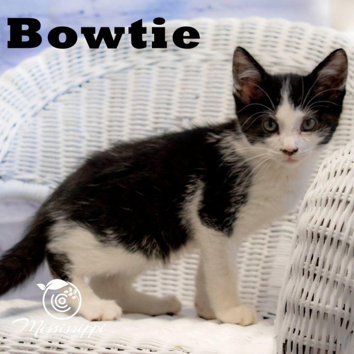 Bowtie 1