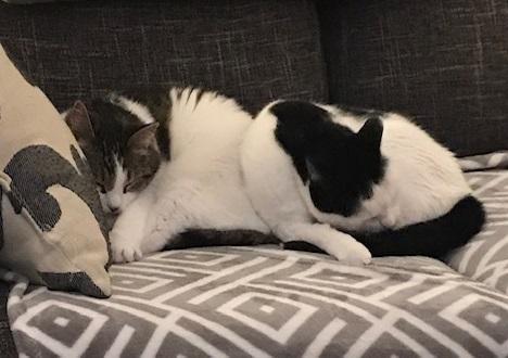 Sofie & Pixxie
