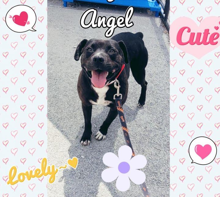 Angel - a shelter favorite! 5