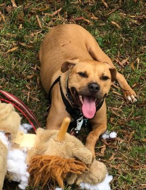 This special needs boy is ready to wheel his way into your heartMeet Matty a six-year-old 50 lb