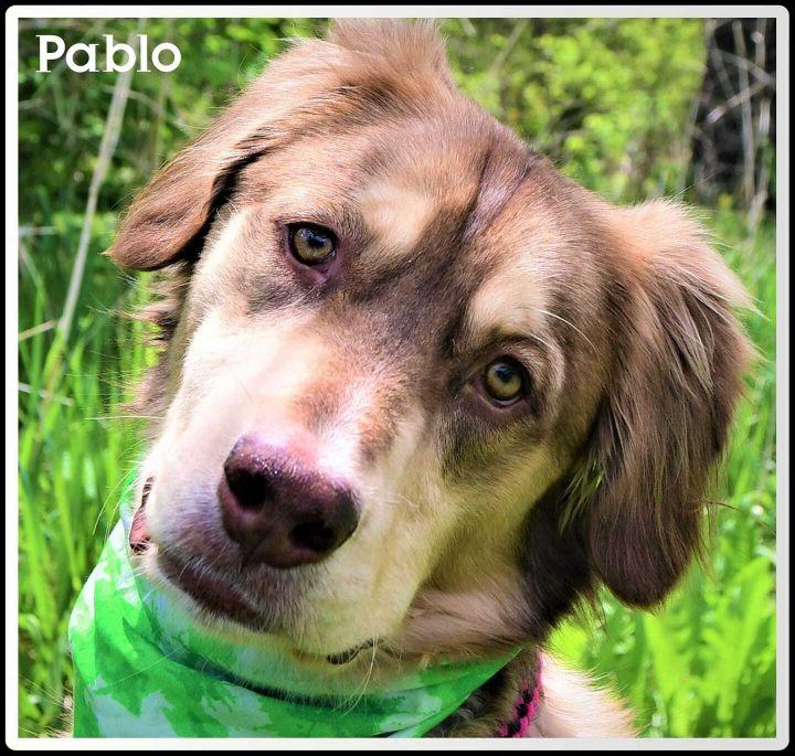 Pablo 1