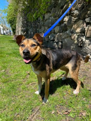 TO APPLY GO TO wwwLuckyDogRefugecom Meet our petite Bridget At 35lbs she is the perfect compac