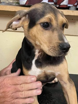 Charlie is a fun loving boy about 10 weeks old from Alabama and he would love nothing more than to