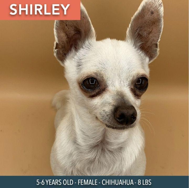 Shirley 1